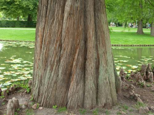 Kräftiger gedrehter Baumstamm