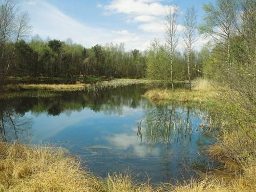 Trockenes Gras, ein See, umgeben von Birken und einem Mischwald