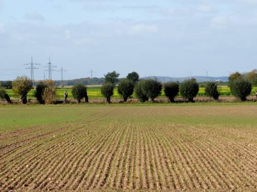 Ackerfurchen, im Hintergrund ein mit Bäumen gesäumter Weg