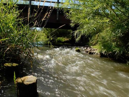 Fluß mit Schilf und Brücke im Hintergrund