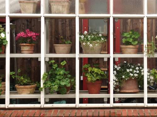 Ein Buchtitel, das ein Gartenwohnhaus von außen zeigt. Zu sehen sind mehrere Blumentöpfe mit unterschiedlichen Pflanzen.