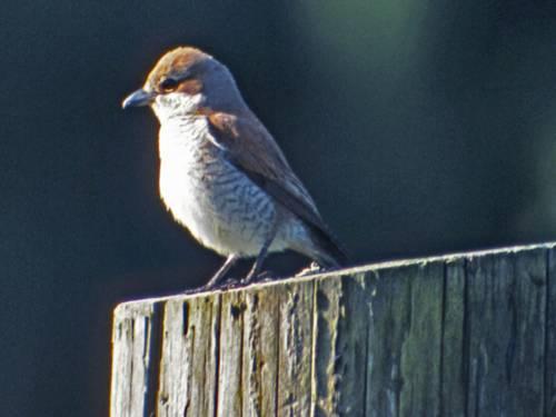 Vogel am Baumstamm