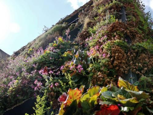 Hausfassade mit Pflanzen
