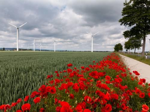 Mohnblumen am Getreidefeldrand und Windräder vor einem von dunklen Wolken verhangenen Himmel