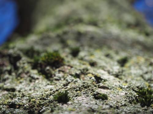 Blick von unten auf die Rinde eines Baumes.