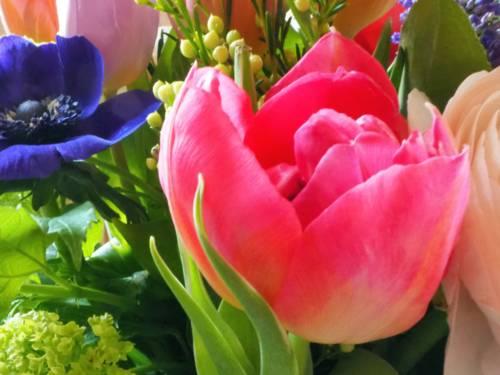 Blüten verschiedener Pflanzen