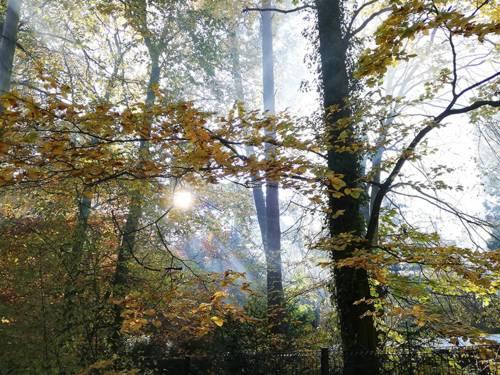 Licht, das sich an den Bäumen im Wald bricht.
