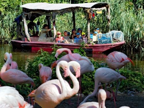 Flamingos in Erlebnis-Zoo