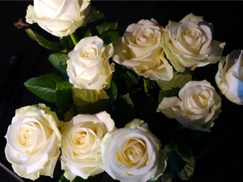 Ein Strauß weiße Rosen. Man blickt von oben auf diese Rosen herunter.