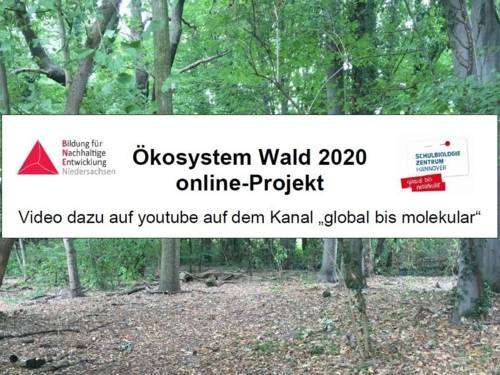 """Bilder eines Waldes. Darüber ist ein Schriftzug gelegt, der auf den YouTube-Kanal """"global bis molekular"""" verweist."""