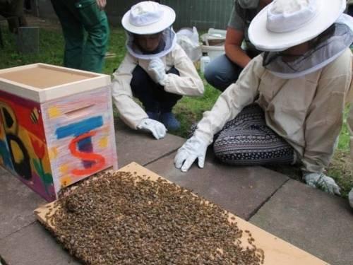 Kinder, die Bienen beobachten, die in einen Stock krabbeln.