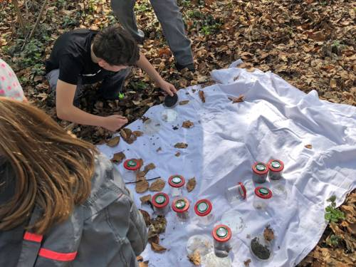 Auf dem Waldboden liegt eine weiße Decke, auf der Kinder Laub und Erdproben in kleine Gläser füllen.