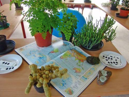 Unterschiedliche Pflanzen neben einem aufgeschlagenen Atlas mit Klimazonen