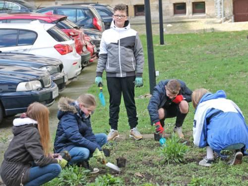 Schülerinnen und Schüler pflanzen Stauden.