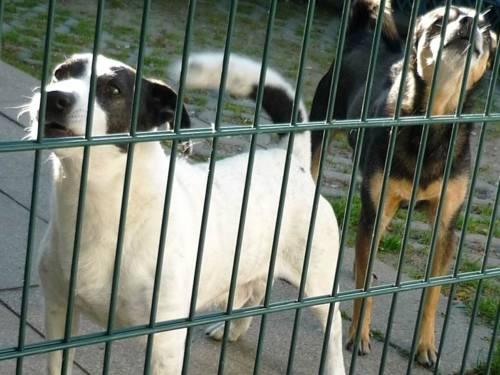 Zwei Hunde hinter einem Gartentor