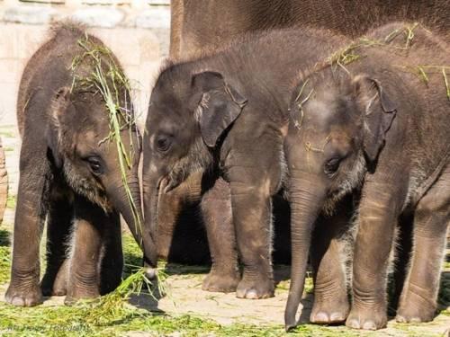 Kleine Elefantenbabys zusammenstehend