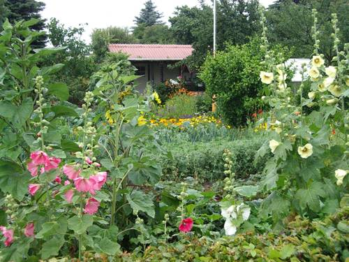 Blick in einen Kleingarten: im Vordergrund Stockrosen, dann ein Gemüsebeet, dahinter Blumenbeete und zum Abschluss ein durch Bäume halb verdecktes Gartenhaus im Hintergrund.