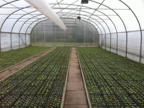 Gewächshaus der Stadtgärtnerei mit Reihen voller Jungpflanzen in Blumentöpfen