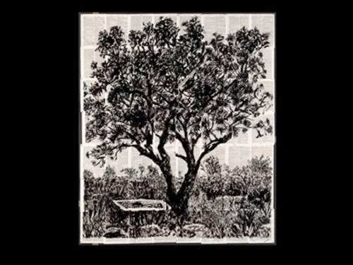 Eine Schwarz-Weiß-Zeichnung eines Baumes inmitten von Gräsern.