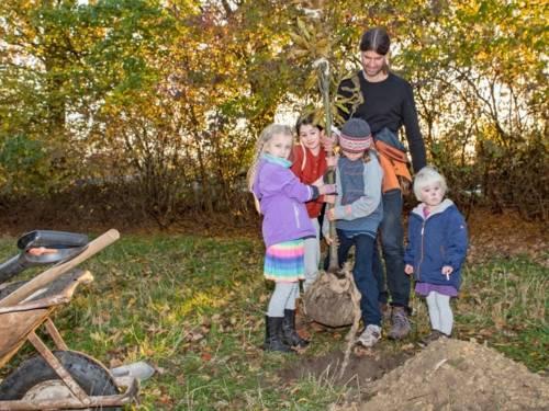 Vier Kinder und ein Erwachsener auf einer Wiese. Sie setzen einen Baum in ein Erdloch.