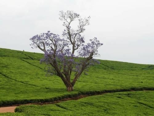 Blühender Baum inmitten grüner Landschaft