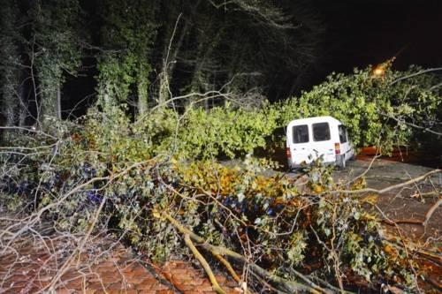 Sturmschaden durch einen umgestürzten Baum