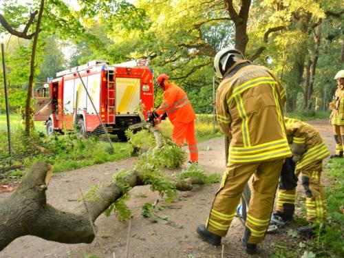 Mehrere Einstzkräfte beseitigen einen umgestürzten Baum. Im Hintergrund ein Löschgruppenfahrzeug 20/16-KatS.