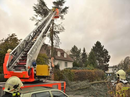 Mehrere Einsatzkräfte der Feuerwehr Hannover, fällen kontrolliert einen, durch den Sturm stark beschädigten Baum.