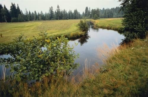 Gewässerrenaturierung ist gelebter Umwelkschutz