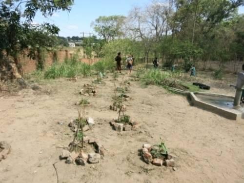 Baumpflanzungen auf dem Schulgelände der Blantyre Girls Primary School
