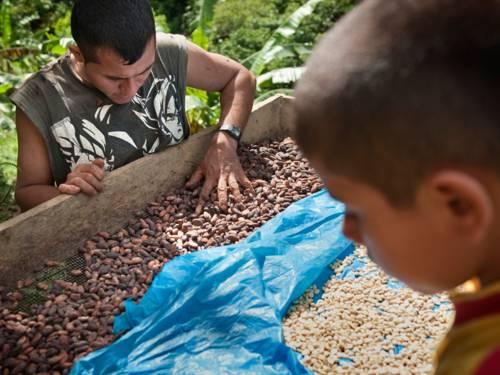 Ein Kakaobauer prüft die Qualität von Kakaobohnen; im Vordergrund rechts ein kleiner Junge