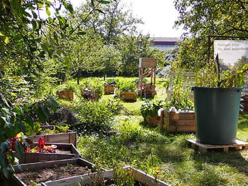 Auf einer Wiese stehen unter Obstbäumen mehrere Holzkisten, in denen Gemüse angepflanzt wird.