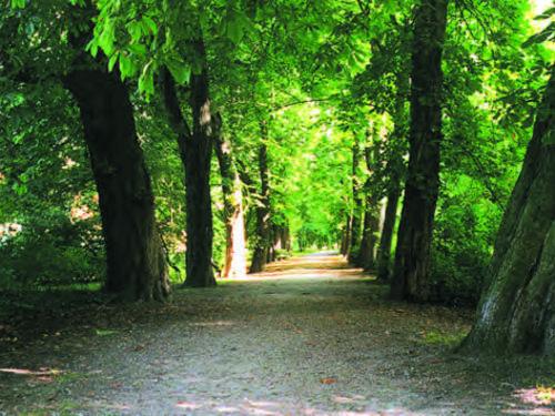 Ein Weg im Hinüberschen Garten
