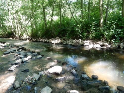 Bachlauf mit großen Steinen und einem baumbewachsenen Ufer