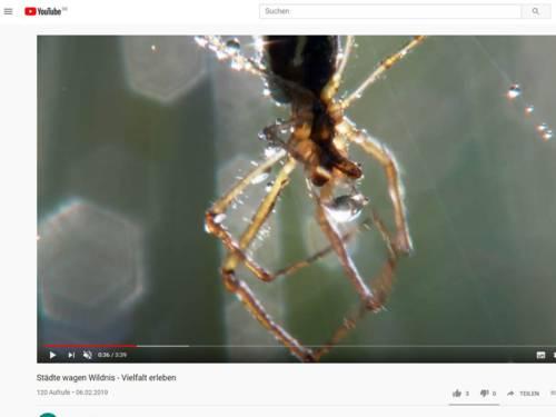Screenshot eines Videos auf YouTube.