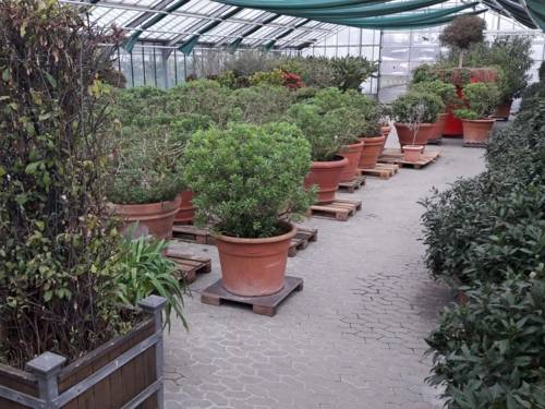 Kübelpflanzen in einer Halle.