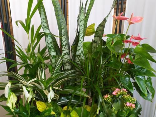 Zimmerpflanzen.