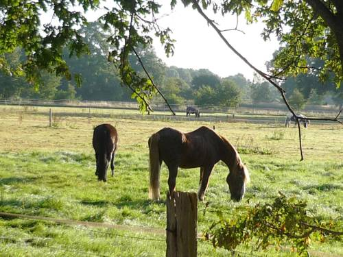 Vier Pferde grasen auf einer Weide