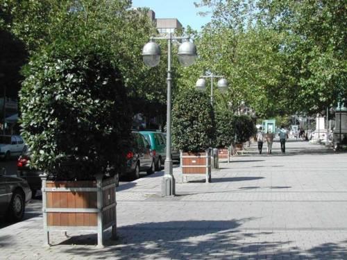 Kübelpflanzen in der Georgsstraße