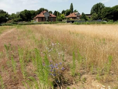 Vegetation auf dem Grundstück in der Alten Döhrener Straße