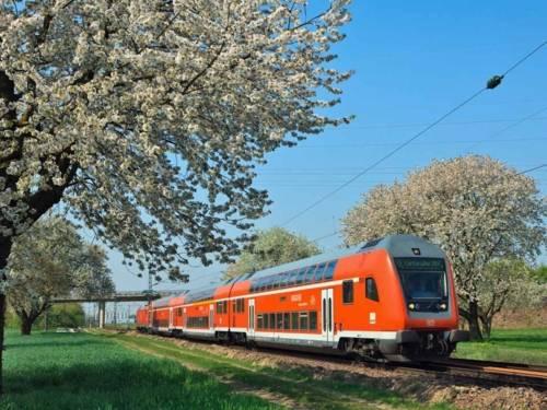 Ein Zug fährt an blühenden Bäumen vorbei