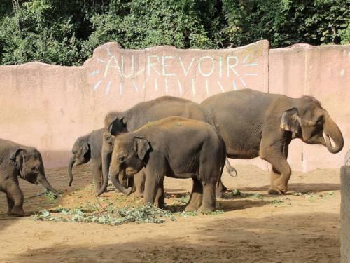 Eine Elefantenfamilie isst.
