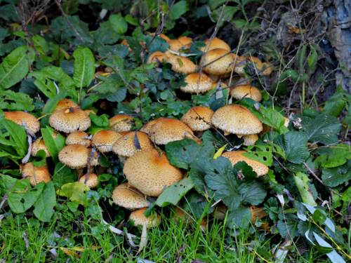 Braune Pilze am Fuße eines Baumes
