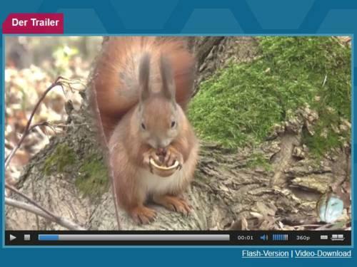 Filmausschnitt, der ein Eichhörnchen zeigt.