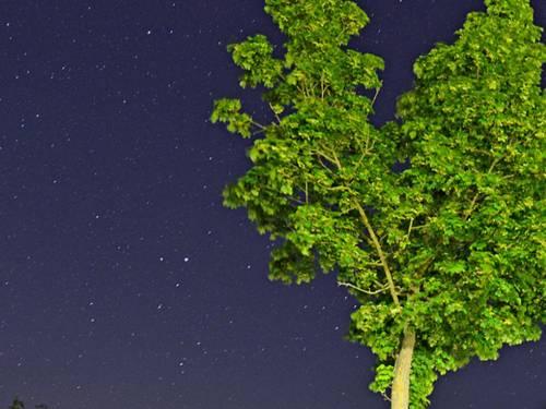 Baum und Sternenhimmel