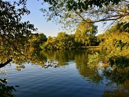 Größerer Teich mit Bäumen am Ufer