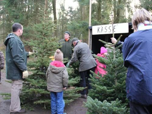 Weihnachtsbaumverkauf im Wald