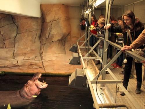 Kinder füttern ein Flusspferd, das im Wasser schwimmt
