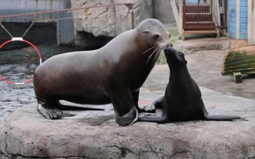 Seelöwe und Seelöwen-Skulptur
