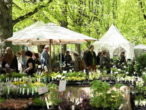 Besucherinnen und Besucher zwischen den aufgebauten Pflanzenständen, die zum Teil durch Sonnenschirme und Zelte beschattet werden